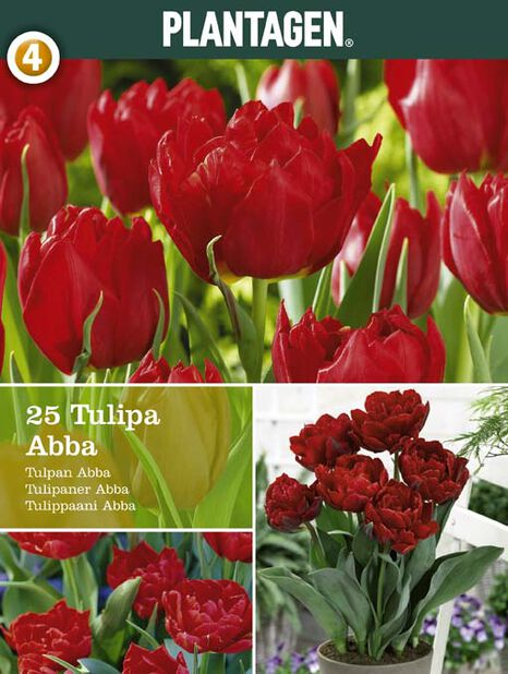 Tulppaani 'Abba', Punainen