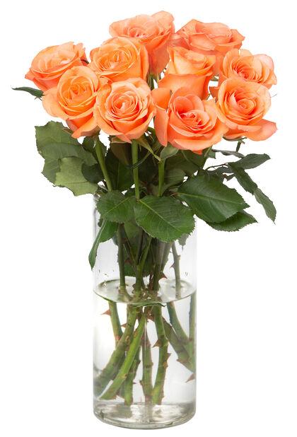 Ruusunippu 10 kpl 40 cm Orange