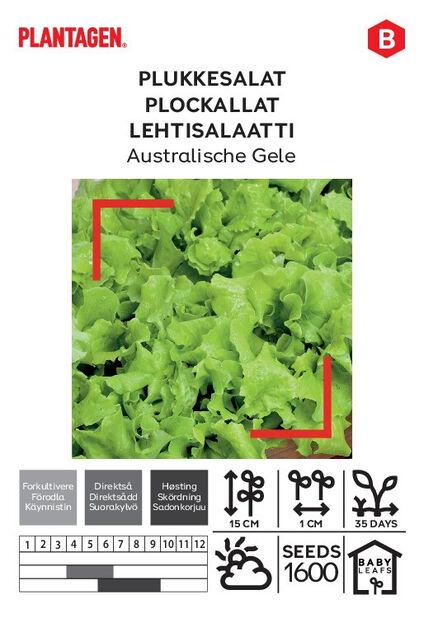 Lehtisalaatti 'Australische Gele'