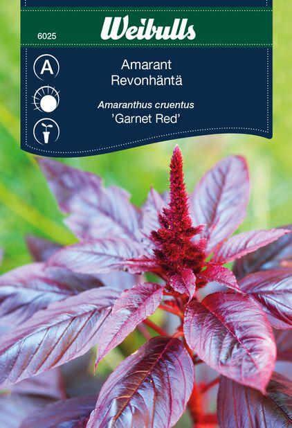 Purppurarevonhäntä 'Garnet Red'
