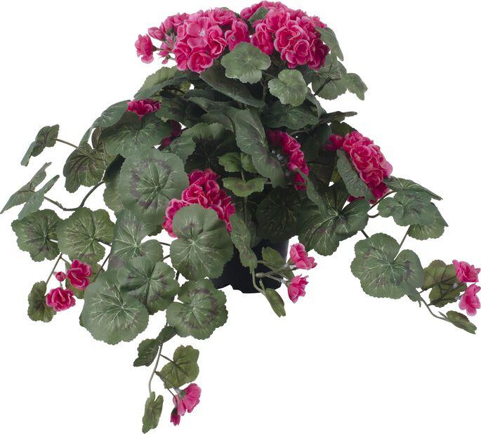 Pelargoni tekokasvi, Korkeus 40 cm, Pinkki