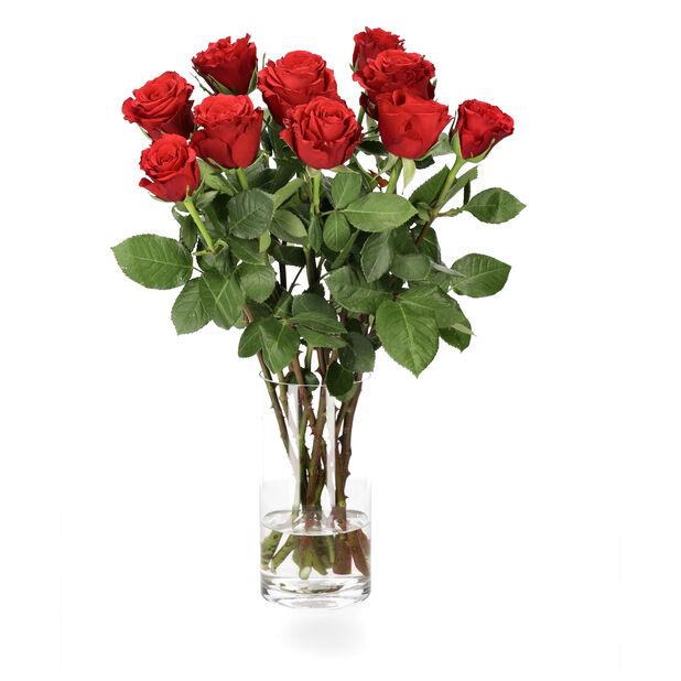 Ruusut premium 10-pakk, Korkeus 50 cm, Punainen