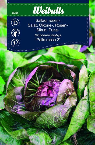 Salaattisikuri 'Palla Rossa 2'