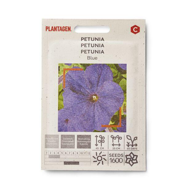 Petunia 'Blue'