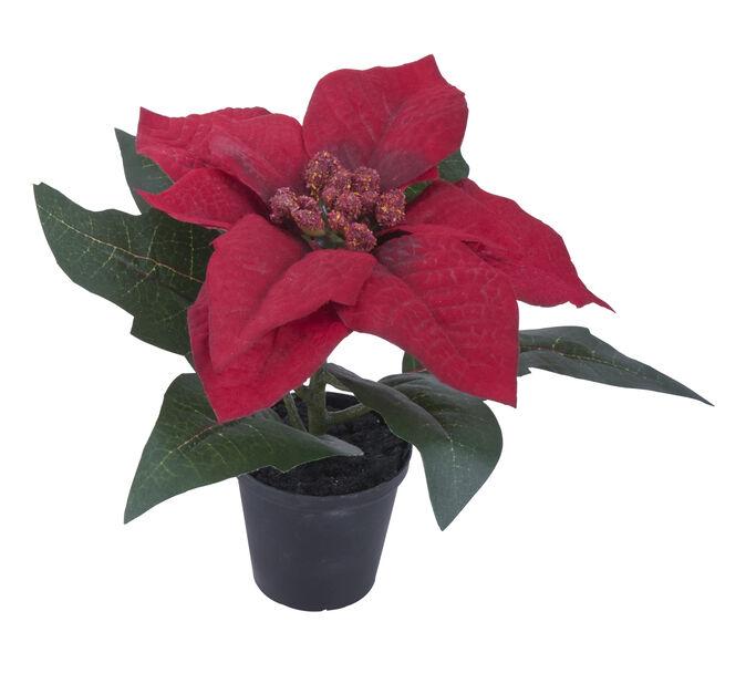 Tekokasvi joulutähti mini , Korkeus 15 cm, Punainen