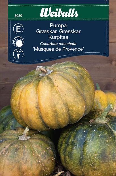 Myskikurpitsa 'Musquee de Provence'