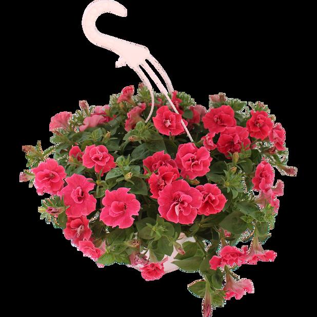 Petunia Origami 'Watermelon', Ø25 cm, Oranssi