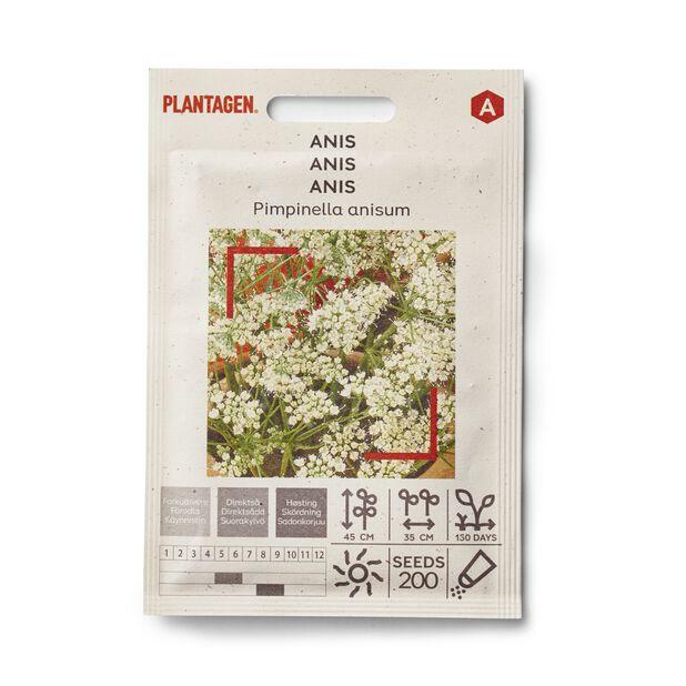 Anis 'Pimpinella anisum'