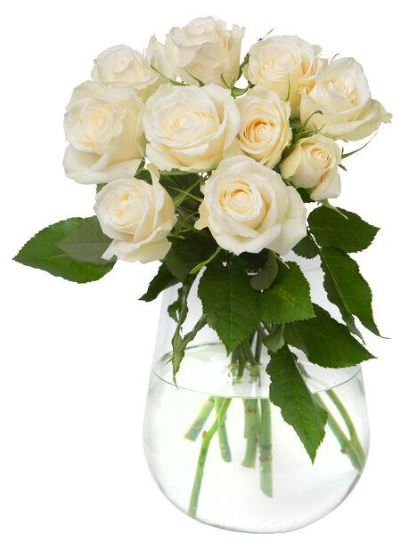 Ruusunippu 10 kpl 40 cm White