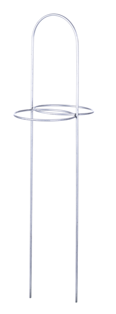 Amaryllistuki 48 cm