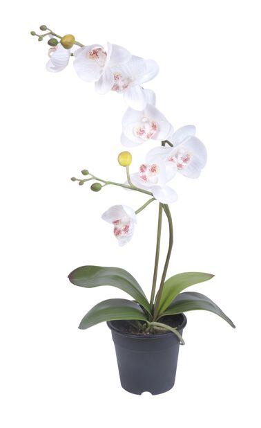 Orkidea ruukussa, K53 cm, valkoinen, tekokasvi
