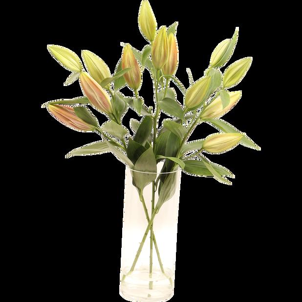 Liljat, Korkeus 50 cm, Useita värejä