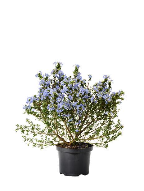 Tuoksio, Ø15 cm, Sininen