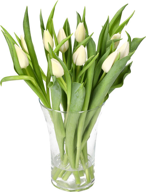 Tulppaaneja 10-pakk, Korkeus 40 cm, Useita värejä