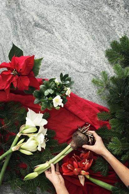 Jouluruusu 'Christmas Carol', Ø9 cm, Valkoinen