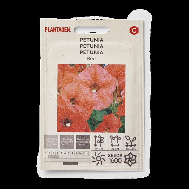 Petunia 'Red'