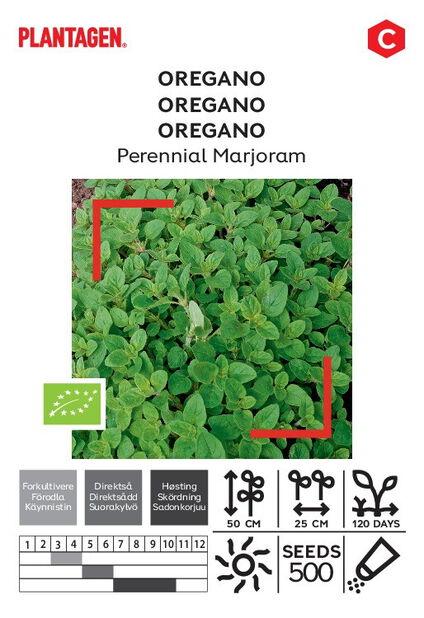 Oregano Perennial Marjoram
