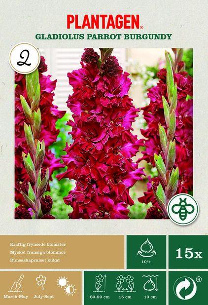 Gladiolus 'Burgundy', Punainen