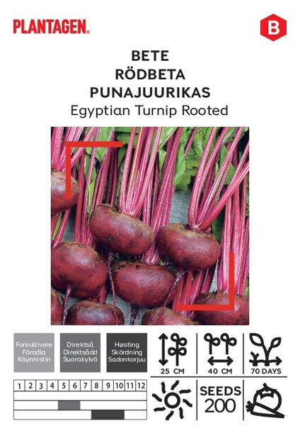 Punajuurikas 'Egyptian Turnip Rooted'