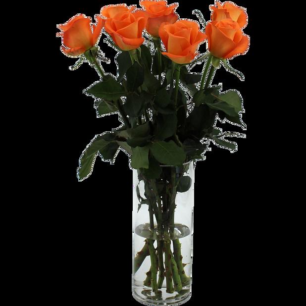 Ruusunippu 7 kpl