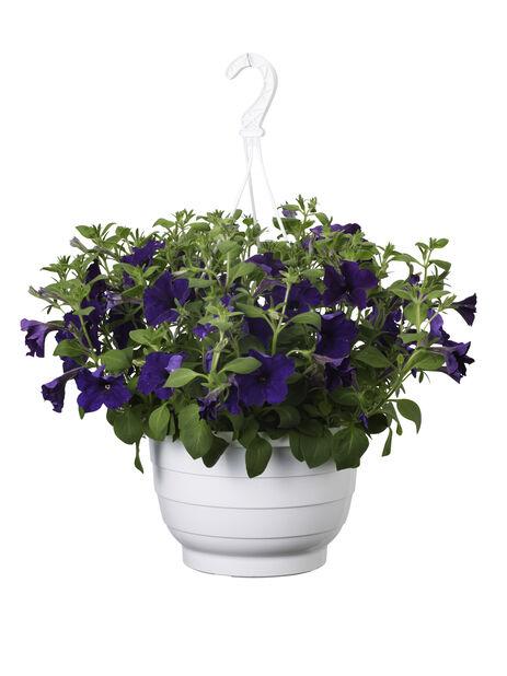 Petunia amppelissa, Ø25 cm, Sininen