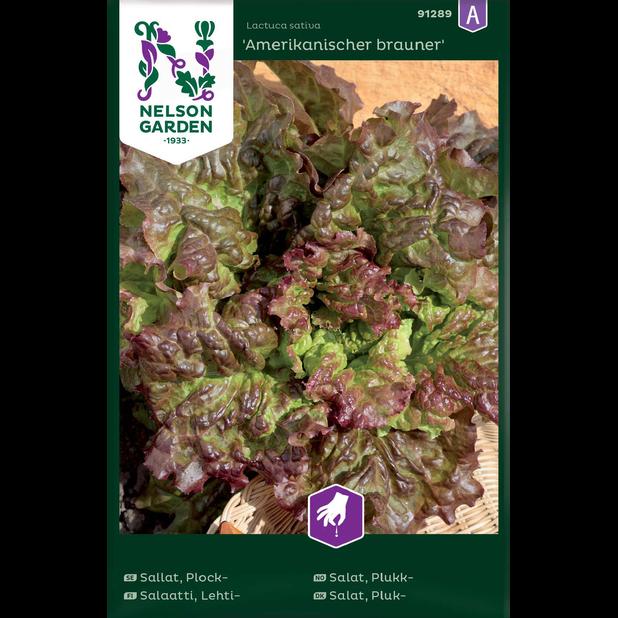 Lehtisalaatti 'Amerikanischer brauner', Monivärinen