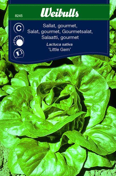 Salaatti 'Little Gem'
