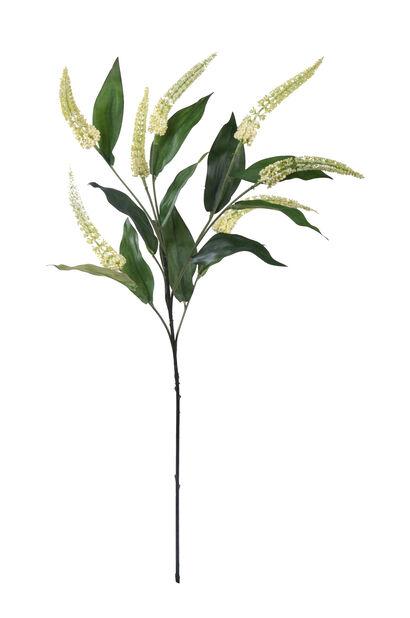 Cascara tekokasvi , Korkeus 72 cm, Valkoinen