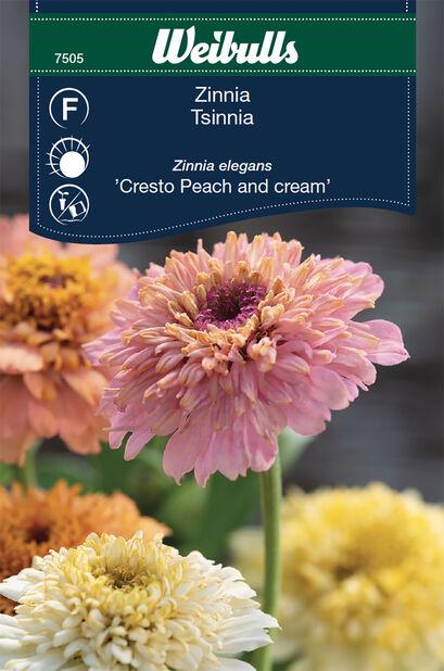 Tsinnia 'Cresto Peach and Cream'