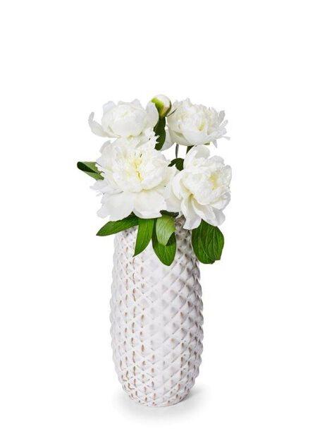 Pioni, Korkeus 50 cm, Valkoinen