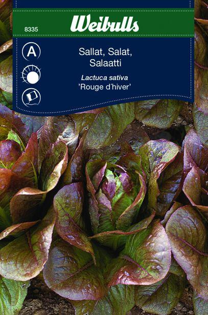 Salaatti 'Rouge d'Hiver'
