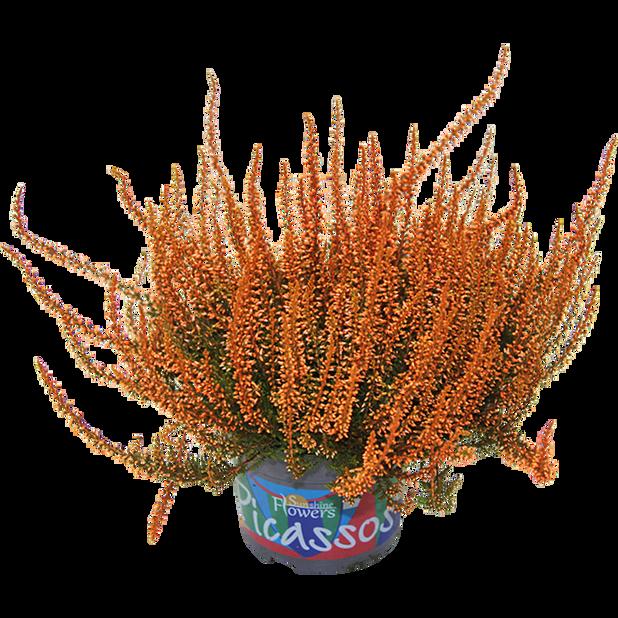 Aitokanerva värjätty, Ø12 cm, Useita värejä