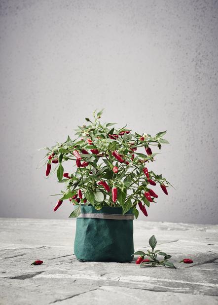 Kasvisäkki Herba, Vihreä