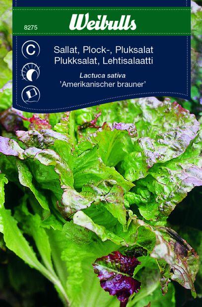 Lehtisalaatti 'Amerikanischer Brauner'