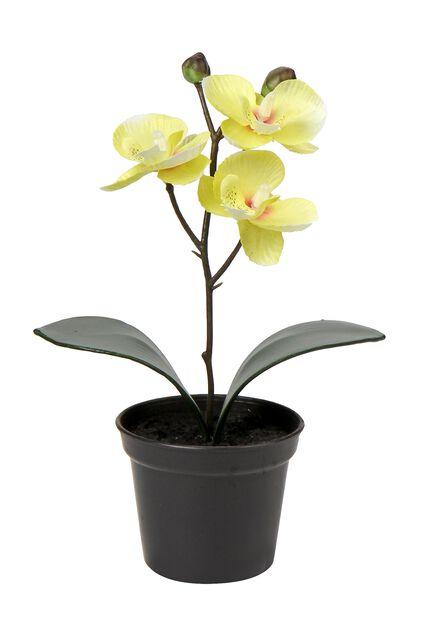Orkidea tekokasvi, Pituus 20 cm, Keltainen