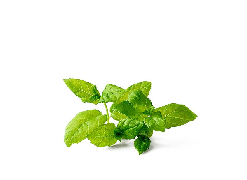 Minttu, Ø10.5 cm, Violetti