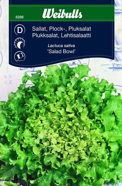 Lehtisalaatti 'Salad Bowl'
