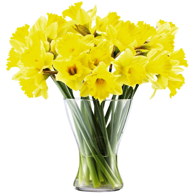 Narsissinippu 18-pakk, Korkeus 38 cm, Keltainen