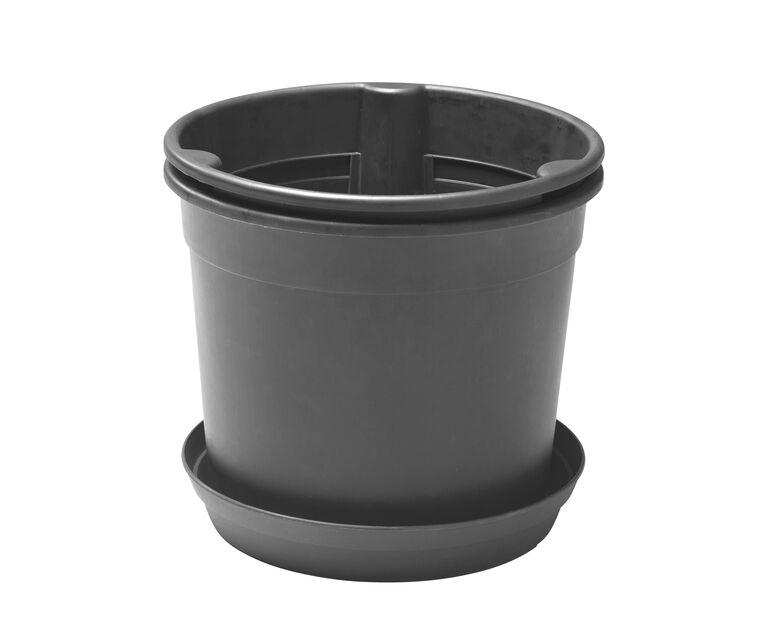 Perunaruukku, Korkeus 25 cm, Musta
