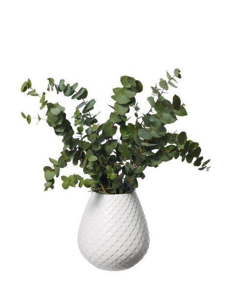 Eukalyptus, Korkeus 50 cm, Vihreä