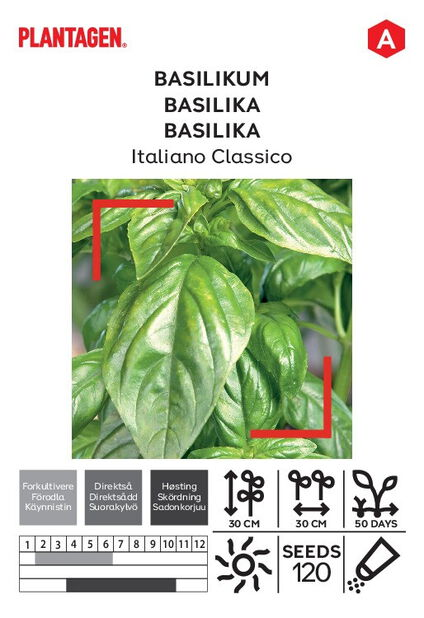 Basilika 'Italiano Classico'