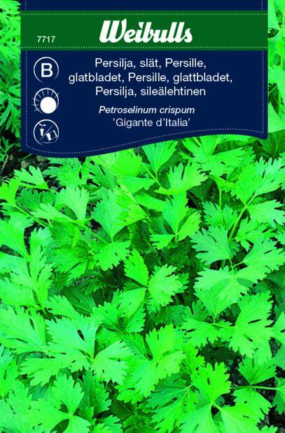 Persilja sileälehtinen  'Gigante d'Italia'