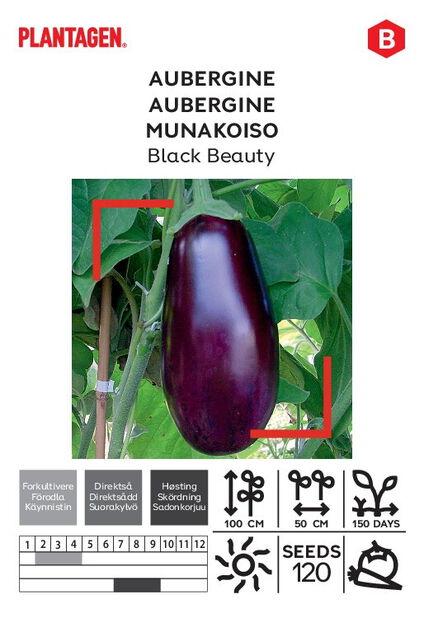 Munakoiso 'Black Beauty'