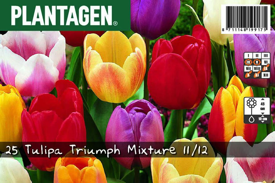 Triumph-tulppaani, Useita värejä