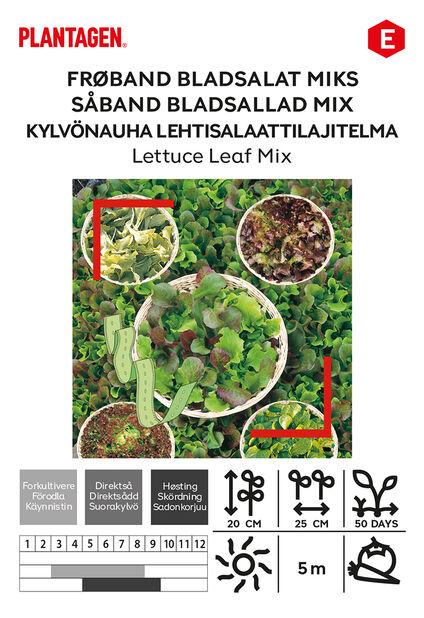 Salaatti kylvönauhassa, Monivärinen