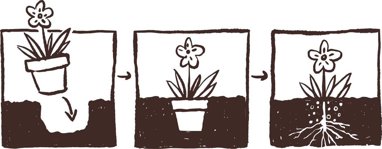 Aitokanerva 'Garden Girls', Ø12 cm, Useita värejä