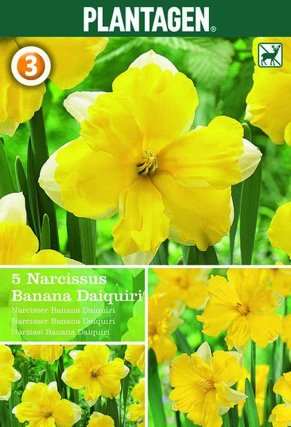 Perhosnarsissi 'Banana Daiquiri', Keltainen