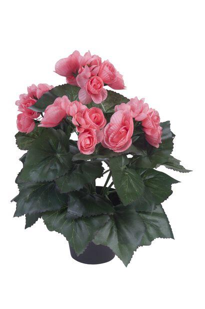 Begonia tekokasvi, Korkeus 32 cm, Pinkki