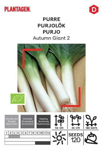 Purjo 'Autumn Giant 2'