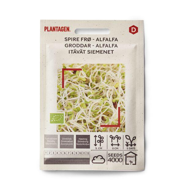 Itävät siemenet Sinimailanen (Alfalfa)